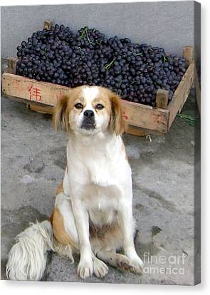 Guardian Of The Grapes Canvas Print by Barbie Corbett-Newmin