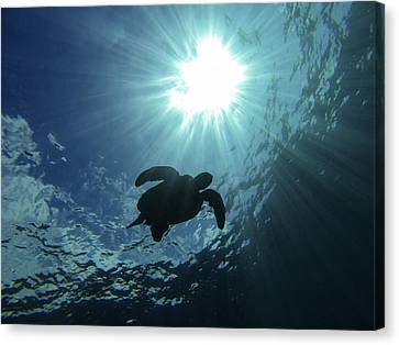 Guardian Of The Sea Canvas Print by Brad Scott