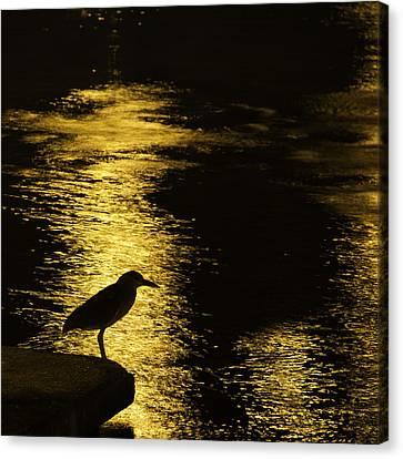 Guarding The Gold Canvas Print