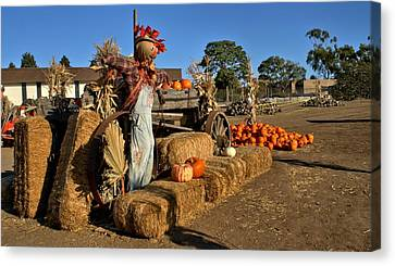 Guarding The Pumpkin Patch Canvas Print by Michael Gordon