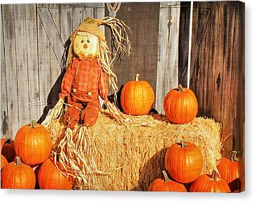 Guarding The Pumpkins Canvas Print by Donna Kennedy