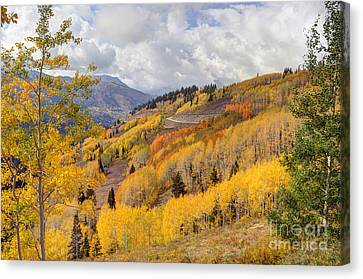 Guardsman Pass Aspen - Big Cottonwood Canyon - Utah Canvas Print by Gary Whitton