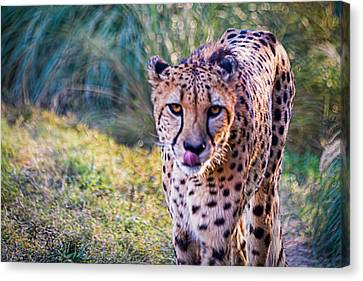 Guess Whose Hungry Canvas Print by Tim Stanley