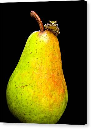 Guest A-pear-ance Canvas Print by Jean Noren