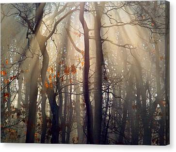 Guiding Light Canvas Print by Dianne Cowen