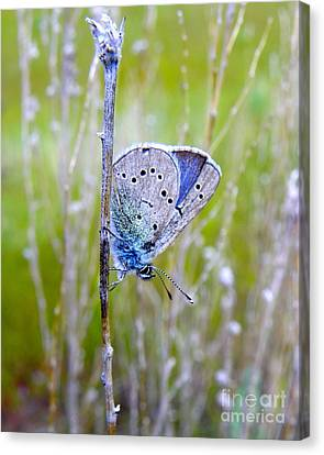 Guilded Blue Canvas Print by KD Johnson