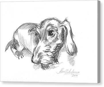 Guilty-looking Young Wire-haired Dachshund Canvas Print