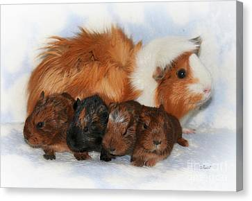 Cavy Canvas Print - Guinea Pig Family by Jutta Maria Pusl
