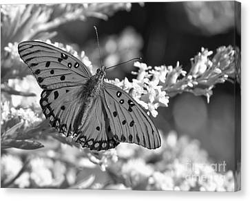 Gulf Fritillary Black And White Canvas Print