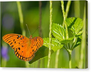 Canvas Print featuring the photograph Gulf Fritillary by Jane Luxton