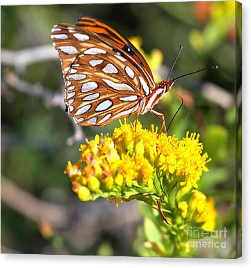 Gulf Fritillary On A Flower Canvas Print