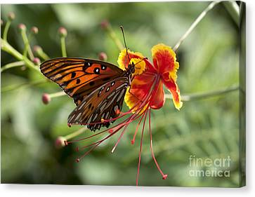 Canvas Print featuring the photograph Gulf Fritillary Photo by Meg Rousher