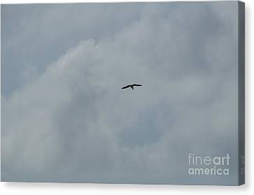 Gull Against The Clouds Canvas Print