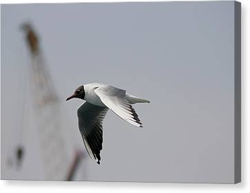 Gull And Crane Canvas Print by Frederic Vigne
