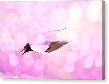 Gull And Nice Bokhe Canvas Print