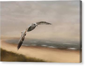 Flying Gull Canvas Print - Gull At The Shore by Jai Johnson