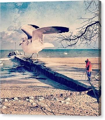 Surrealism Canvas Print - #gull #beautiful #bird #seagull #water by Jill Battaglia
