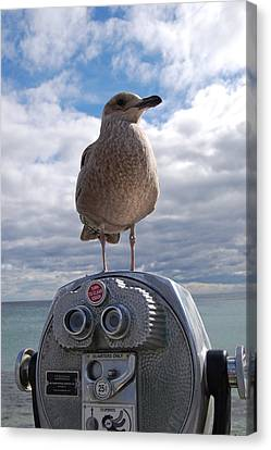 Gull Canvas Print by Mim White