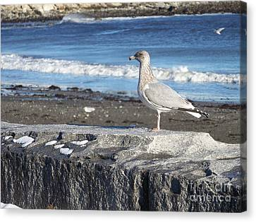 Canvas Print featuring the photograph Seagull  by Eunice Miller