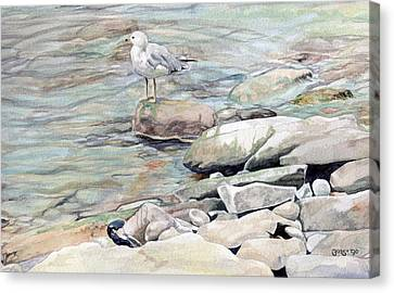 Gull On The Rocks Canvas Print