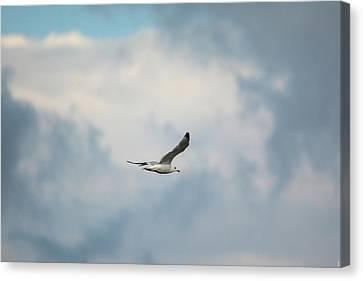 Gull Over Paris Landing Canvas Print