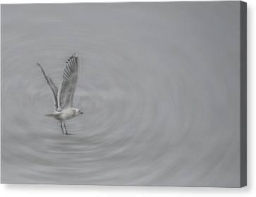 Gull Vortex Canvas Print