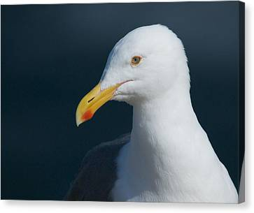 Gull Watcher Canvas Print by Bob Smithing