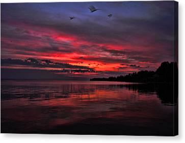 Gulls At Sunrise Canvas Print