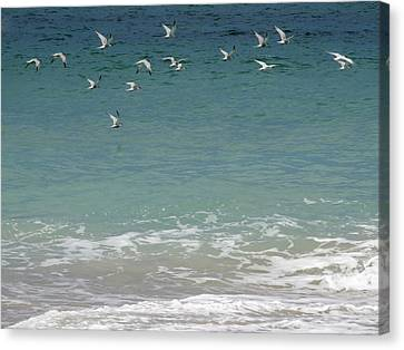Gulls Flying Over The Ocean Canvas Print by Zina Stromberg