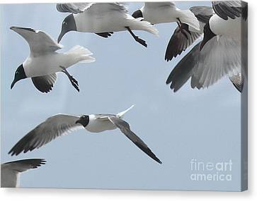 Gulls Hovering 3 Canvas Print by Cathy Lindsey