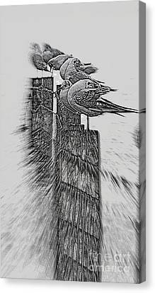 Gulls In Pencil Effect Canvas Print by Linsey Williams