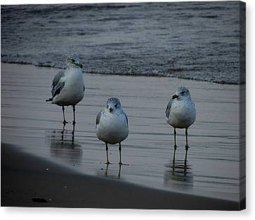 Canvas Print featuring the photograph Gulls Night Out by Kimberly Mackowski