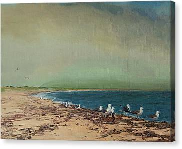 Gulls On The Seashore Canvas Print