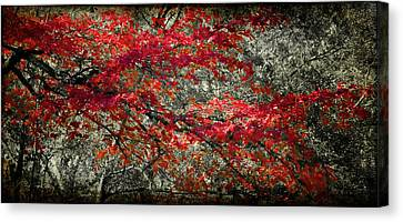 Gum Fall Canvas Print by Lana Trussell