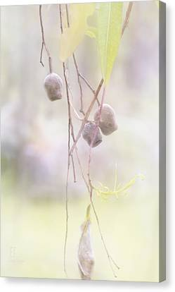 Gum Nuts Canvas Print by Elaine Teague