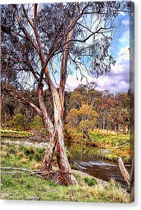 Gum Tree By The River Canvas Print by Wallaroo Images