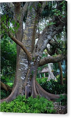 Gumby Tree Canvas Print by Judy Wolinsky