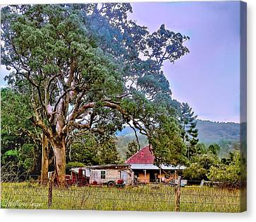 Gumtree Gully Canvas Print by Wallaroo Images