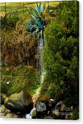 Gushing Agave Canvas Print by Al Bourassa