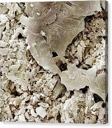 Gypsum Crystals Sem Canvas Print by Science Photo Library