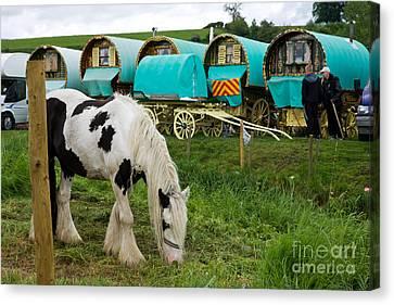 Gypsy Cob And Wagons Canvas Print by Liz  Alderdice