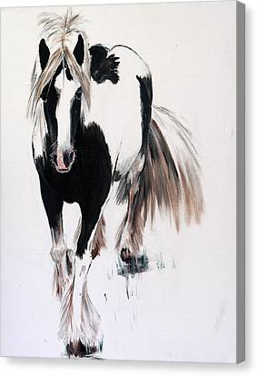 Forelock Canvas Print - Gypsy Vanner by Isabella F Abbie Shores