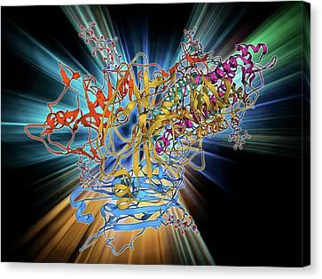 H5n1 Haemagglutinin Protein Subunit Canvas Print by Laguna Design