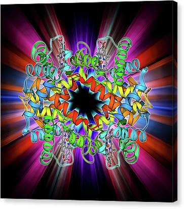 Haemoglobin S Canvas Print by Laguna Design