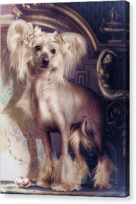 Hair Less Chinese Canvas Print by Cindy Grundsten