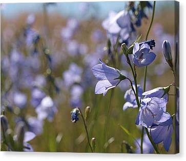 Harebells Canvas Print by Jenessa Rahn