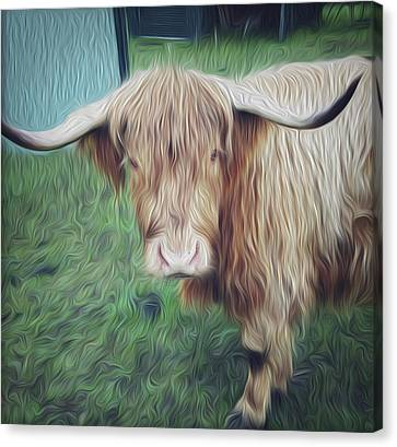 Hairy Cow Canvas Print by Les Cunliffe