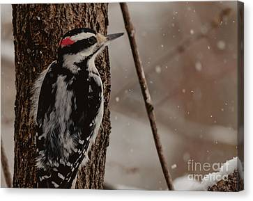 Hairy In The Snow Canvas Print