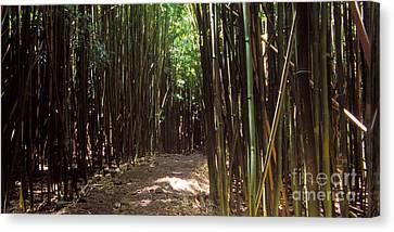 Bamboo House Canvas Print - Haleakala  Hnp 0142-2 by Frank Wicker