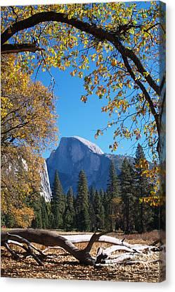 Half Dome In Yosemite Canvas Print by Alex Cassels